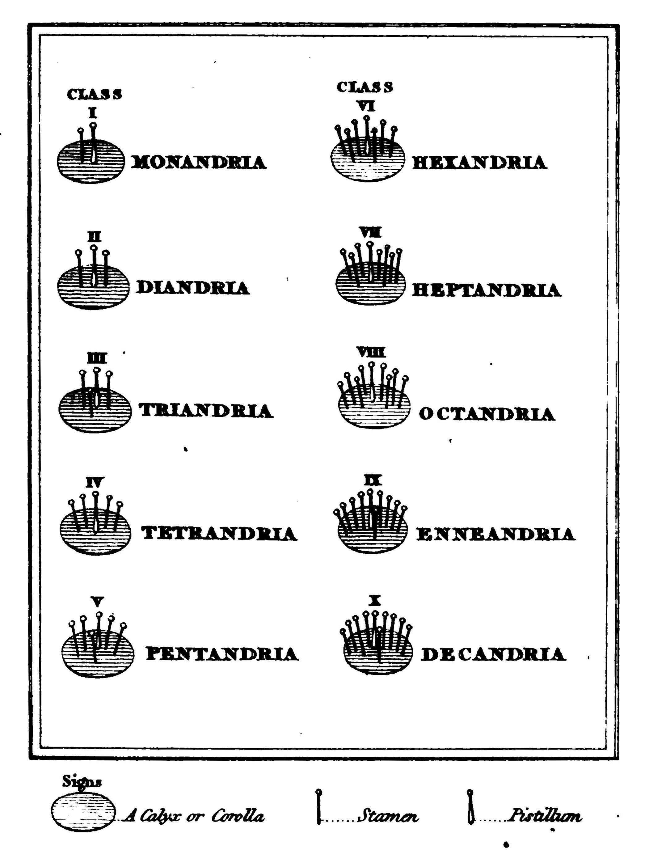 The character of the first ten classes of the Linnaean System of Botany
